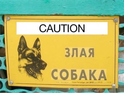 Яндекс.Переводчик начал переводить текст с картинки